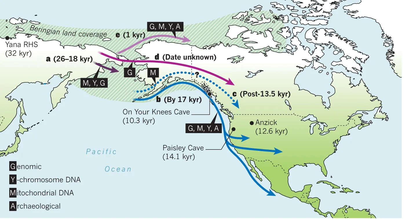 Map showing the most likely routes of migration into the New World from Asia and the most likely routes used over time as conditions changed